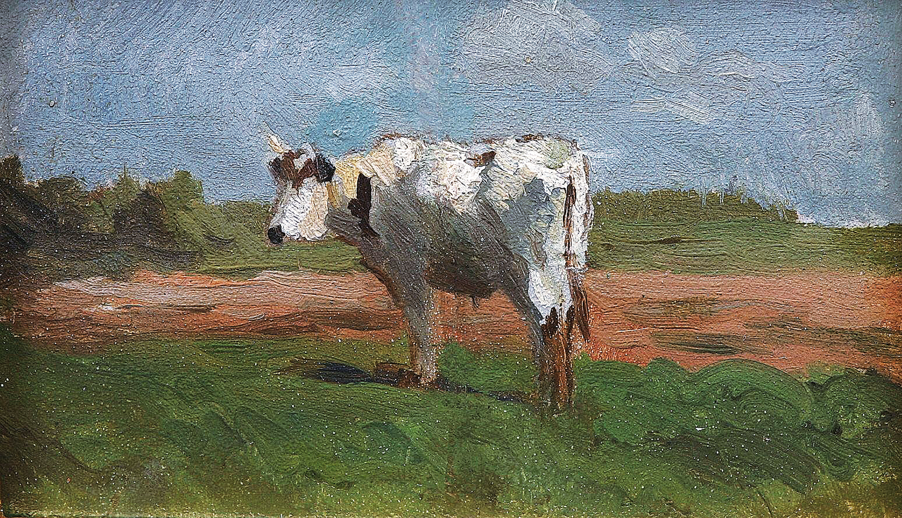 """The white cow"""
