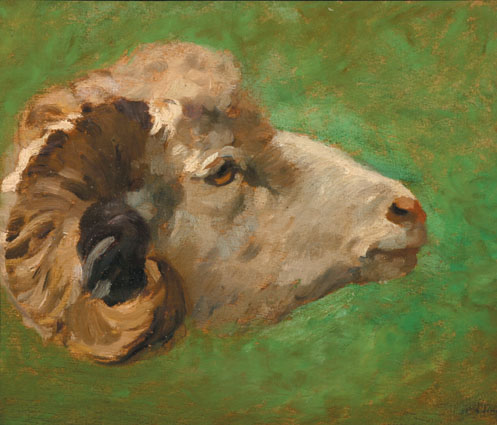 Head of a ram on green background