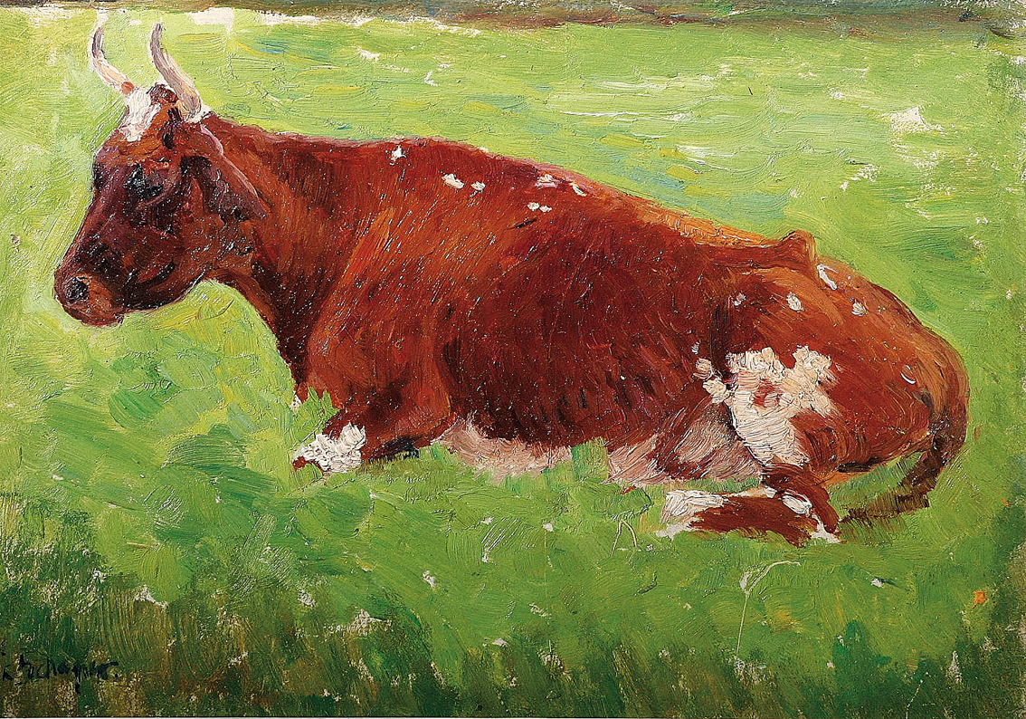 A brown cow on a pasture