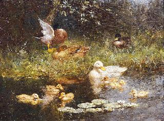 Ducks near a pond