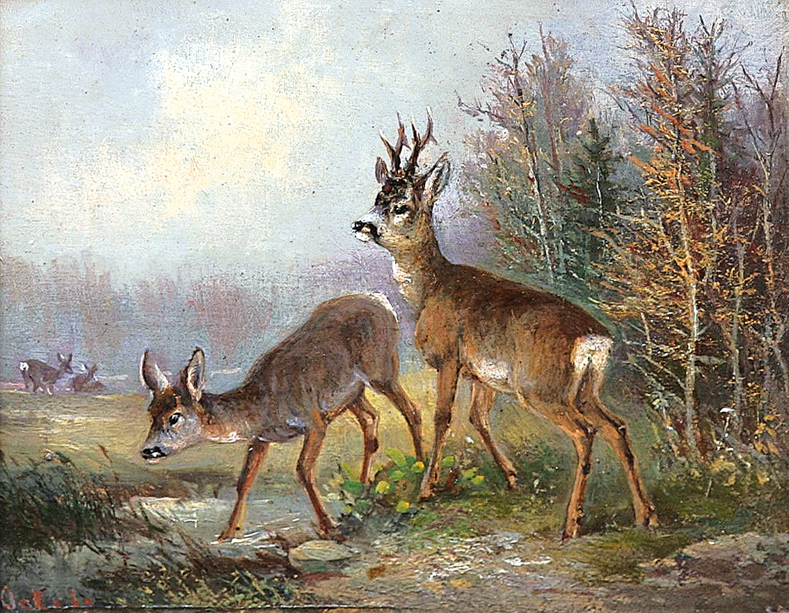 Deer at the forest edge