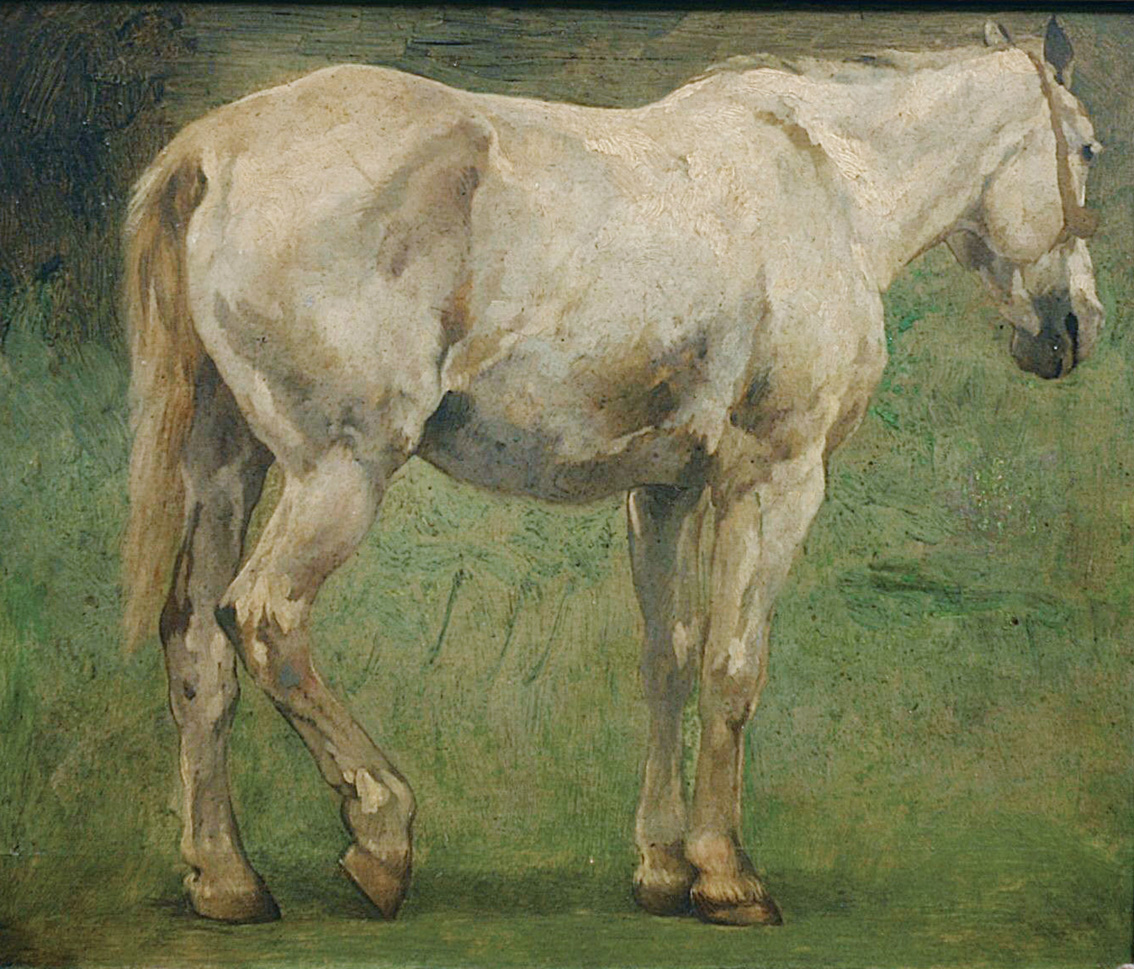 A grey horse on the meadow