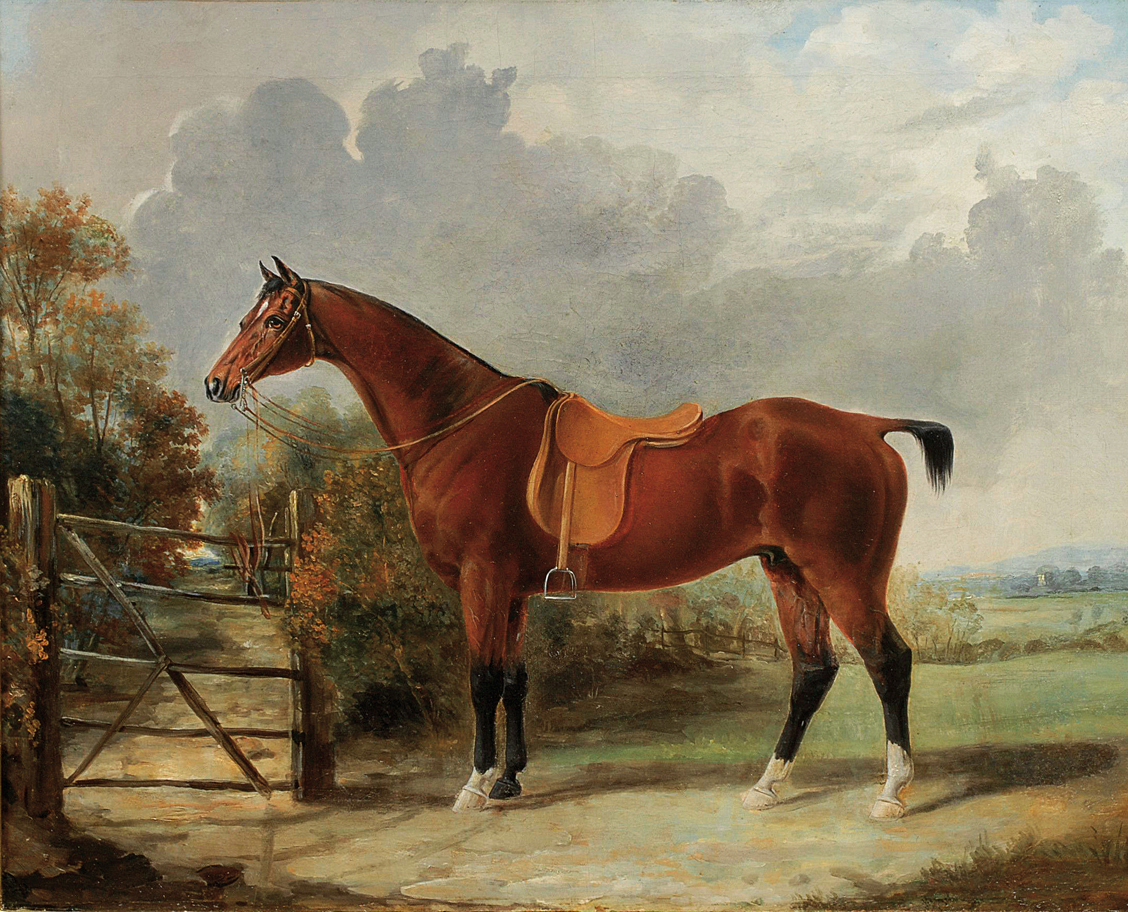 A portrait of a horse