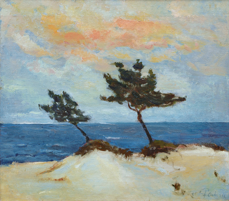 Pines at the Coast of the Baltic Sea