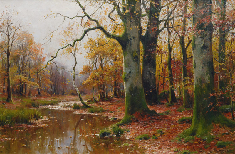 Creek in an autumnal Forest