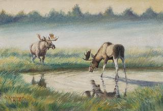 Elks at a Watering Hole in East Prussia
