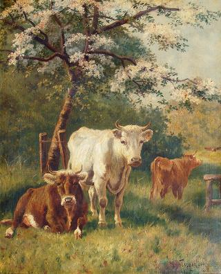 Resting Cattle under a blooming Tree