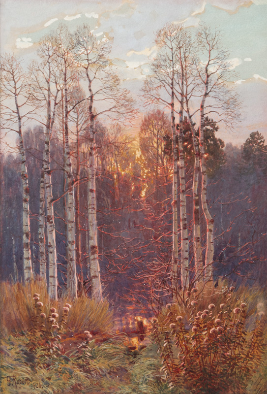 Birch Forest in Sunset