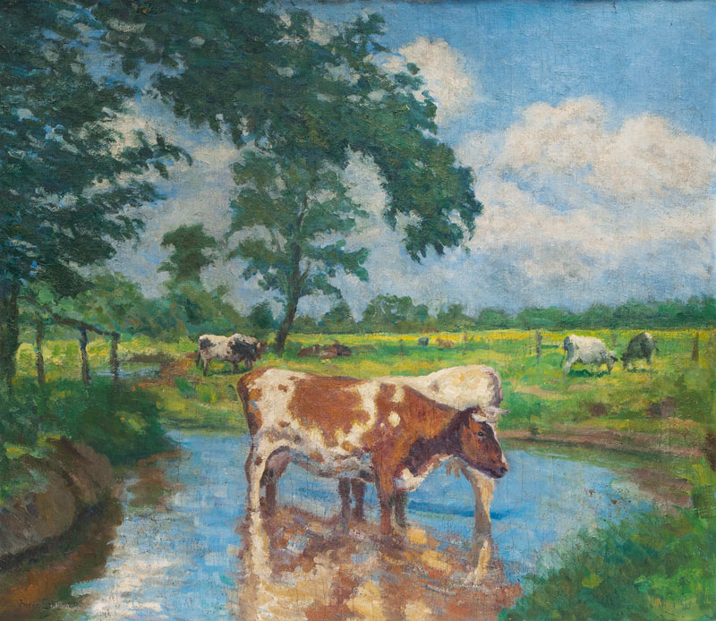 Cows in a Creek