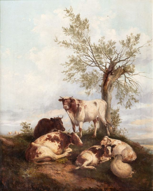 Resting Sheep and Cows