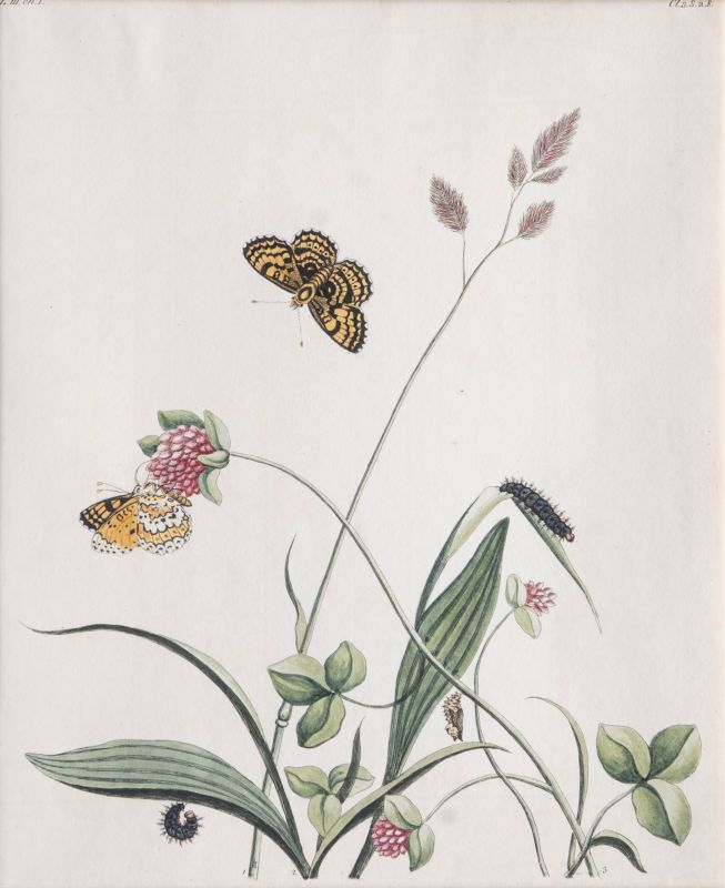 Two Prints: Insects on Plants