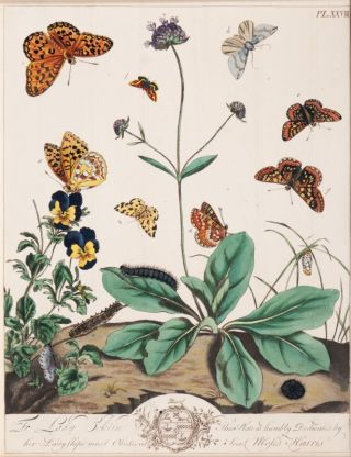 Two Prints with Insects and Plants
