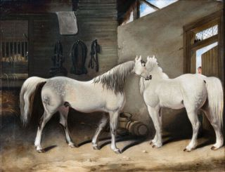 Two Grays in the Stable