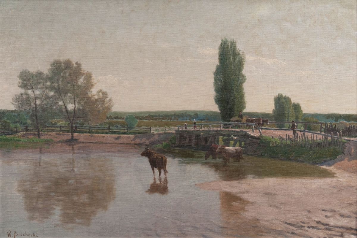 Cows in the Prosna River