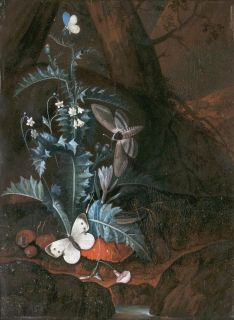 Forest Floor Still Life with Snake, Butterflies and Moth