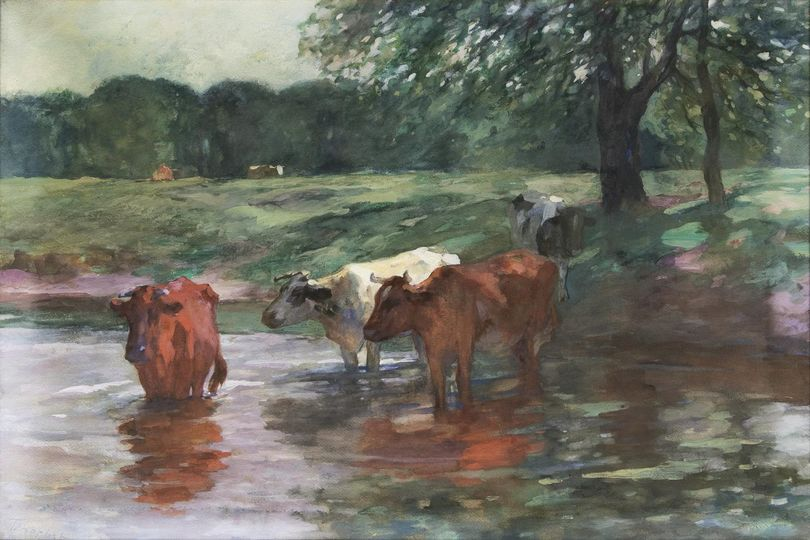 Cows by the Water