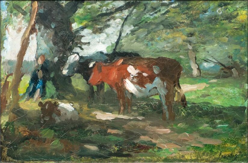 Cows and Boy